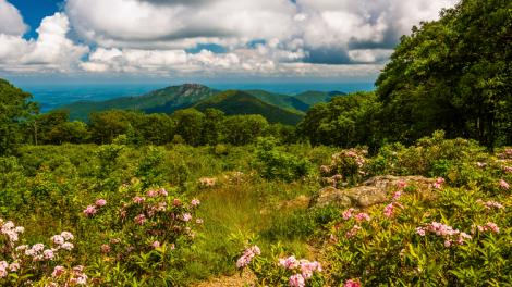 Mountain laurel framing a gorgeous view in Shenandoah National Park