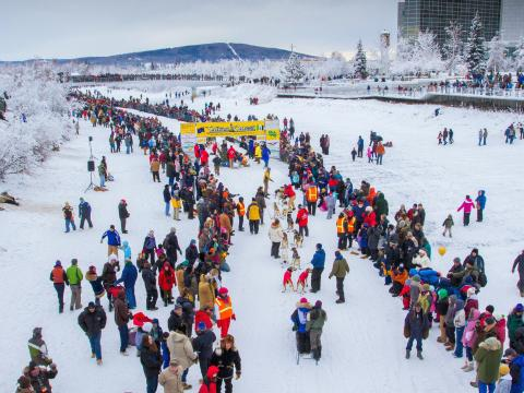 Bustling crowds at the Yukon Quest Dog International Dog Sled Race