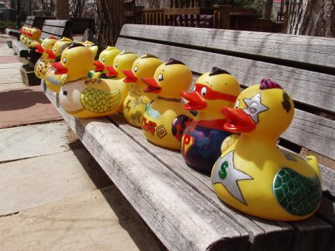 """""""Adopted"""" toys ducks ready to race and vie for prizes in the Duck Race in Fall River"""