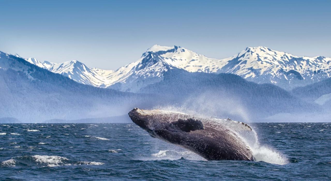 Glacier Bay National Park Gousa