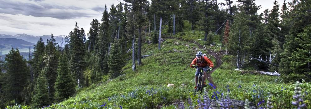 Mountain biking along a trail amid wildflowers near Bozeman, Montana